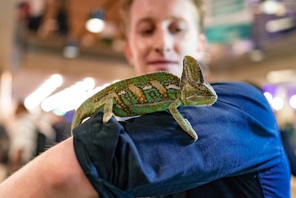 Chamäleon Carlo - Maskottchen von Kameleoon auf dem gms19